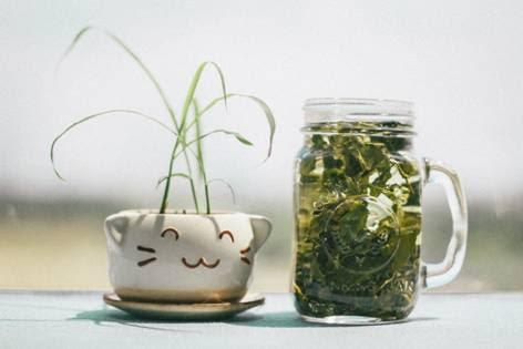 Zielona herbata filiżanka