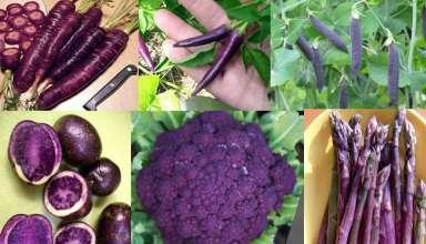 fioletowe warzywa
